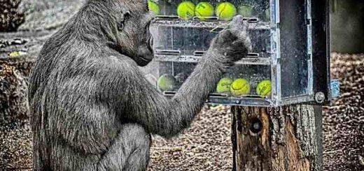 Opice a športovanie detí